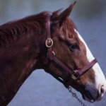img003.horseheadjpg-300x199