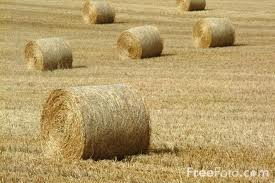 freehaypic Extreme Weather Conditions and Reduced Production May Affect Hay Quality, Availability and Price