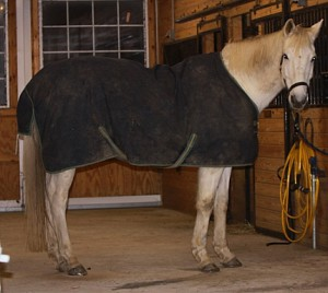 winter horse 300x268 Winter Care for Horses