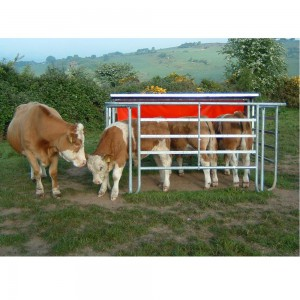 Calf Creep feeder on website 300x300 Cattle Corner Tips