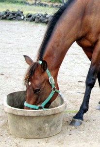 feed horse 206x300 Horse Q&A: Proper Eating