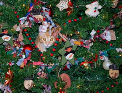 63919 396x303 Cat in christmas tree 12 Tips For A Cat Safe Christmas Tree