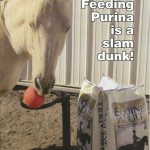 Purina Horse Second Place1 150x150 Photo Contest Winners