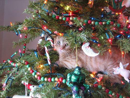 cat in a christmas tree 12 Tips For A Cat Safe Christmas Tree