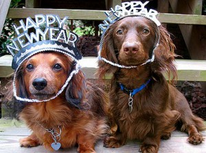 happy new year dogs 300x224 Closed New Years Day
