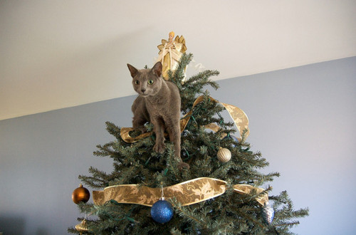 Cat Safe Christmas Tree :: McGregor General Store
