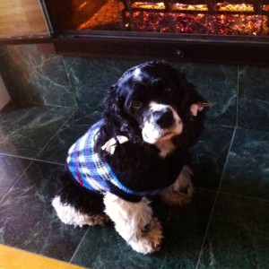 dog sweater fire 300x300 50% OFF   All Pet Dental Products