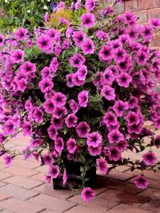 flowers 225x300 Plant Sale