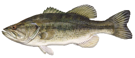 LargeMouthBass The Fish Truck is Coming!