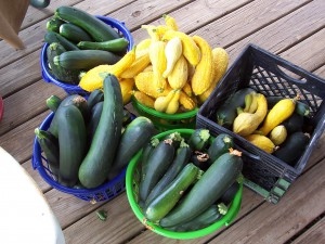 Veggies 300x225 Fertilizer and Your Garden