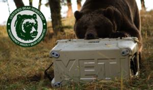 yeti beark 300x176 YETI Coolers are Virtually Indestructible