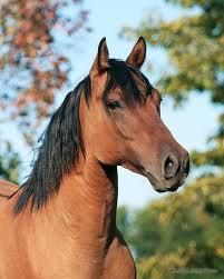 quarterhorse We carry Renew Gold™ horse feed