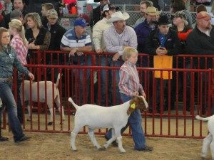 jakesgoat 300x225 Local Stock Show Dates