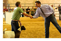 winners circle 1 7 Stock Show Preparation Tips