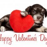 DoggieValentine 150x150 Valentines Day Gift Ideas