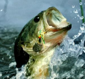 bass-jumping-water