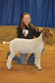 2014 McLennan County Junior Livestock Show