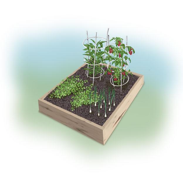 chile relleno garden illo Garden ideas: Chilies Rellenos Garden