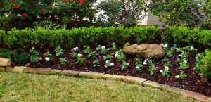 LandscapingTexas 300x145 10 Things to Consider When Purchasing Plants