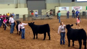 mclennan county jr livestock show 300x170 Show Feed and Supplies